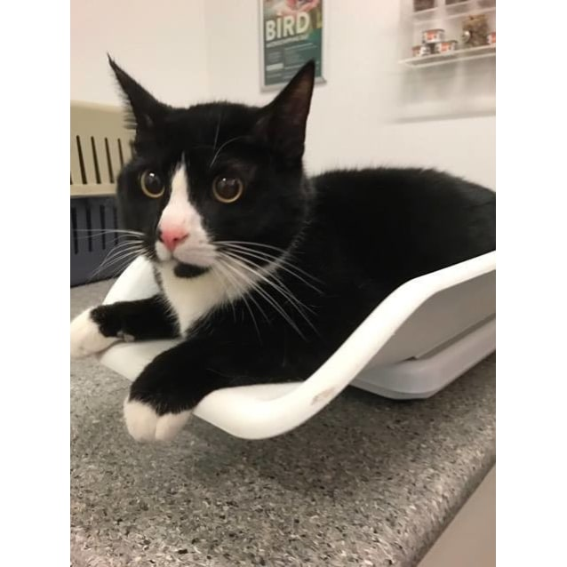 Photo of Shadow (Located In Springvale)