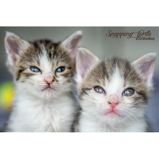 Photo of Bubble And Squeak
