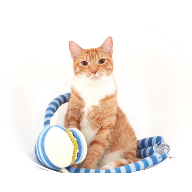 Photo of Nala *Sydney Animal Rescue Inc.*