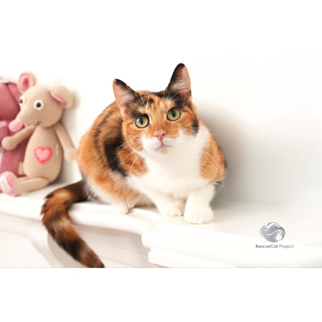 Photo of Venus *Sydney Animal Rescue Inc*