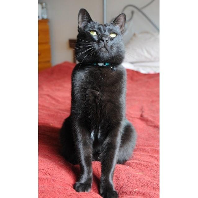 Photo of Mr Biggles 🎩 Utter Bastard Of A Cat