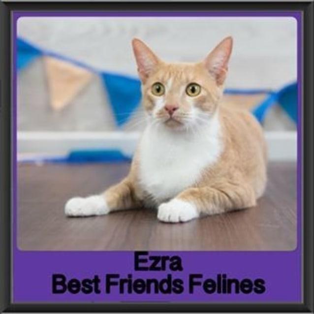 Photo of Ezra