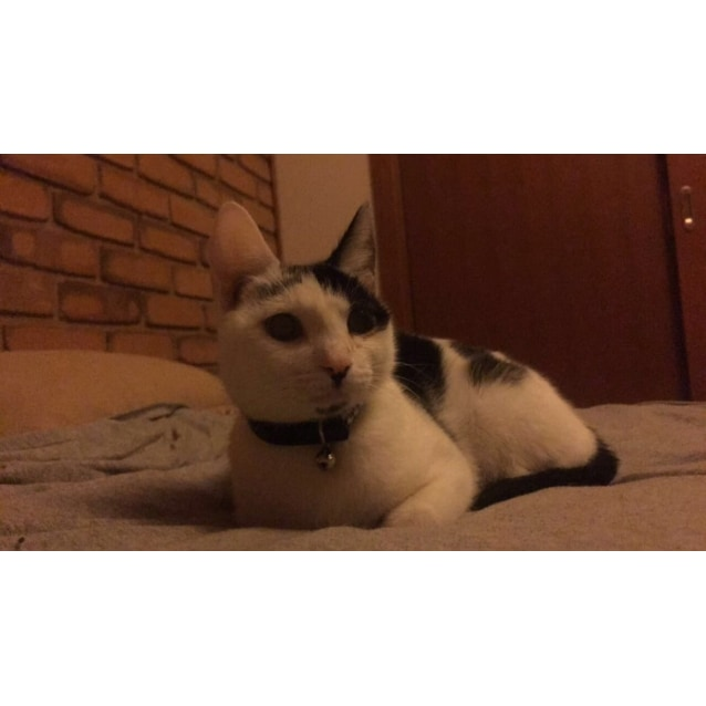 Photo of Tansy