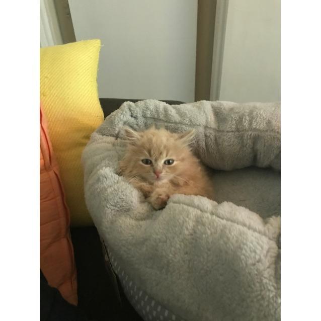 Photo of Wookie 7 Weeks Old