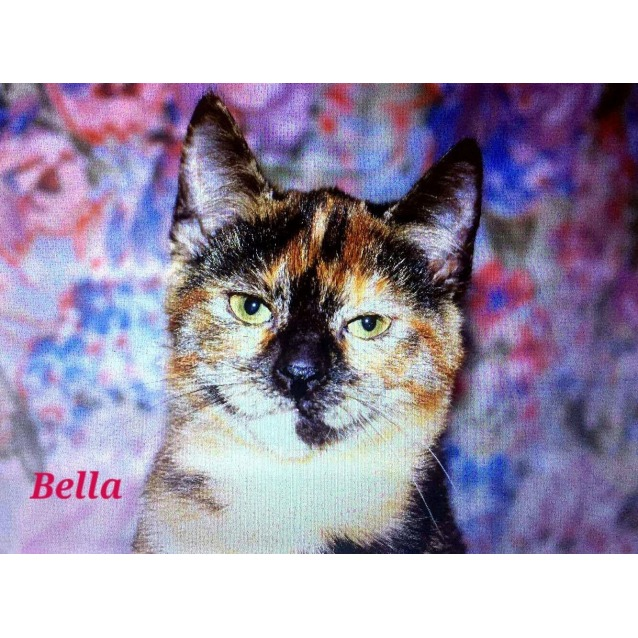 Photo of Beautiful Bella!