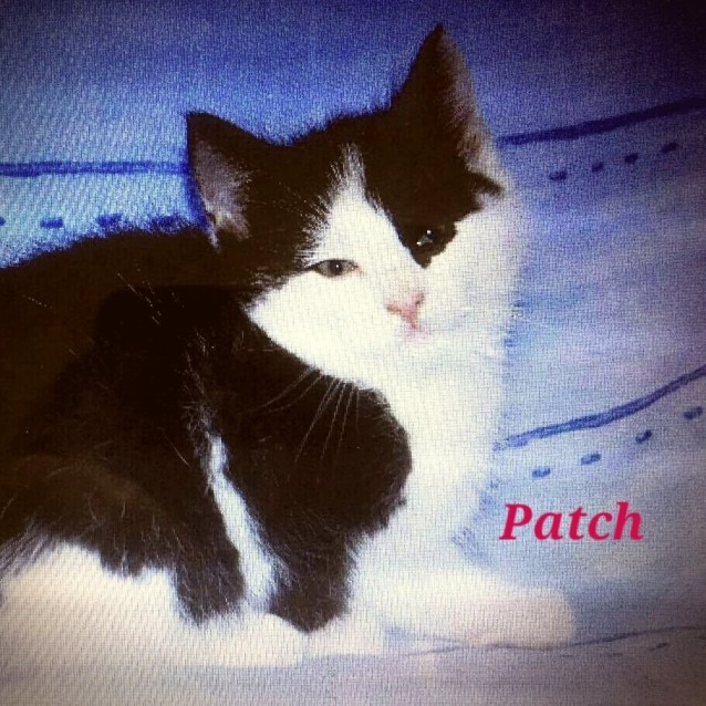 Photo of Patch The Adventurer