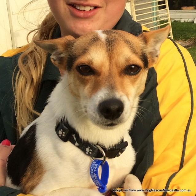 Photo of Daisy ~ Mini Foxy, 2yo (On Trial 21/6/17)
