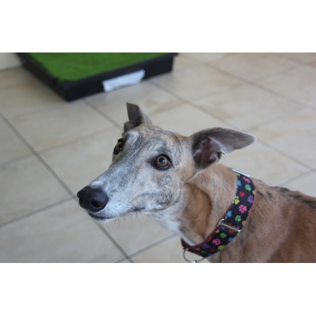 "Photo of ""Rosie"", Fun Loving And Fearless. Brisbane"