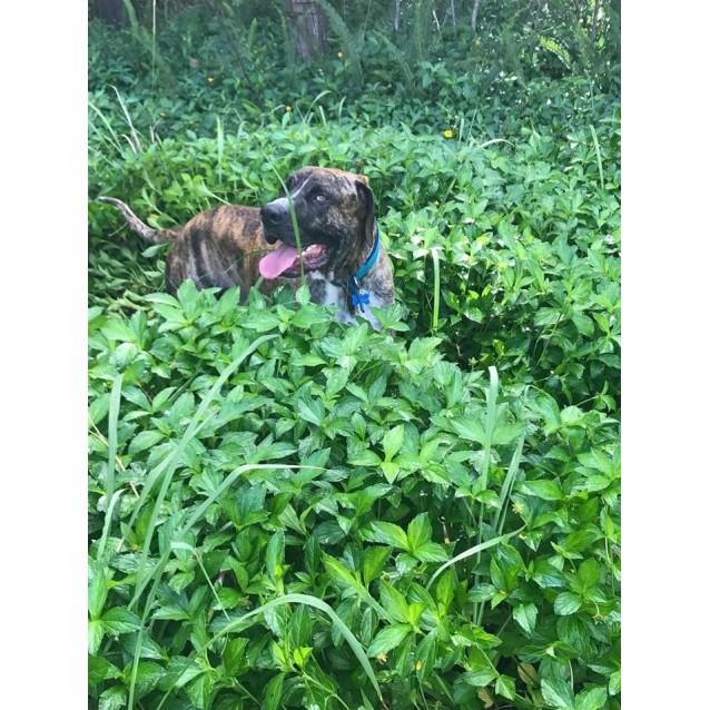 Photo of Mambo