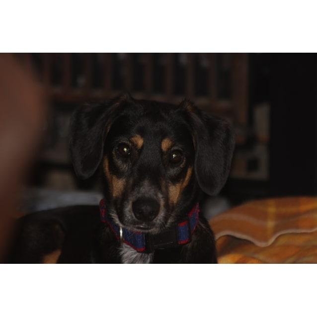 Photo of Casey