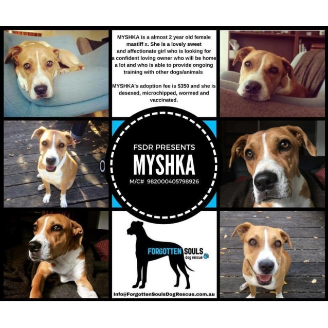 Photo of Myshka