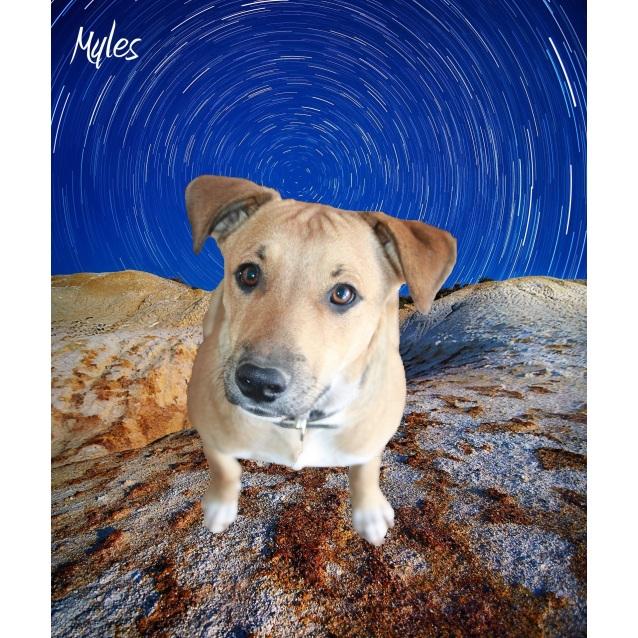 Photo of Myles  Dg17 168