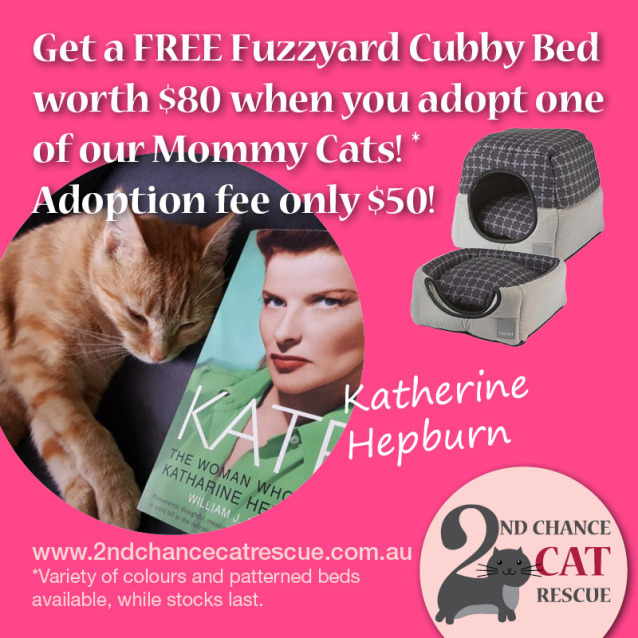 Photo of Katherine Hepburn ** 2nd Chance Cat Rescue**