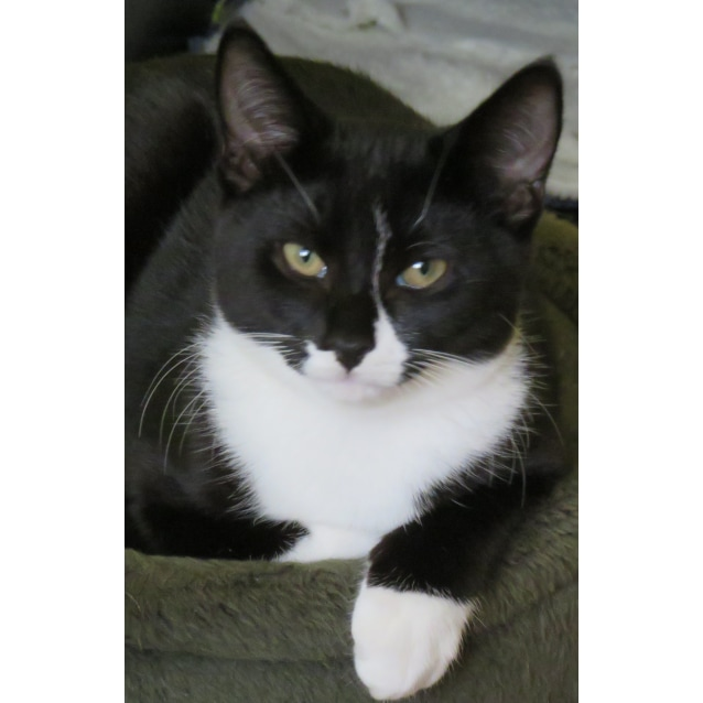 Photo of Raphael