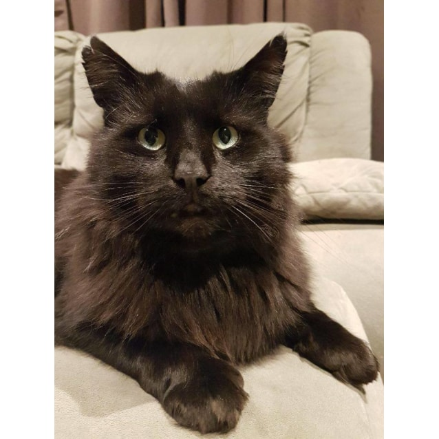 Photo of Panther (Located In Cranbourne)