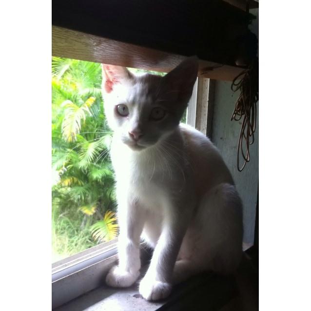Photo of Willson