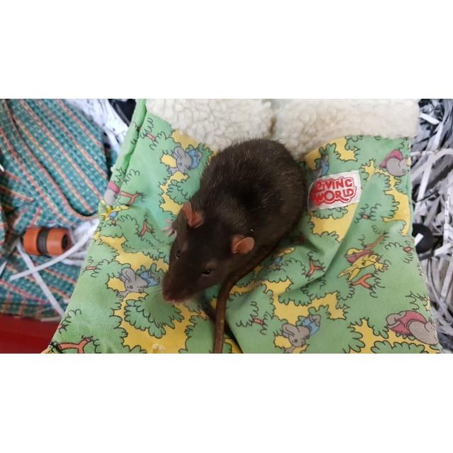 Photo of Rat Rat Ratties!!!