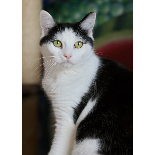Photo of Maui **2nd Chance Cat Rescue**