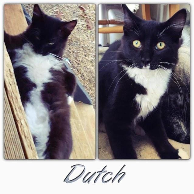 Photo of Dutch
