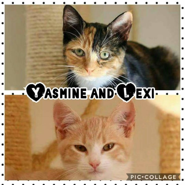 Photo of Yasmine And Lexi
