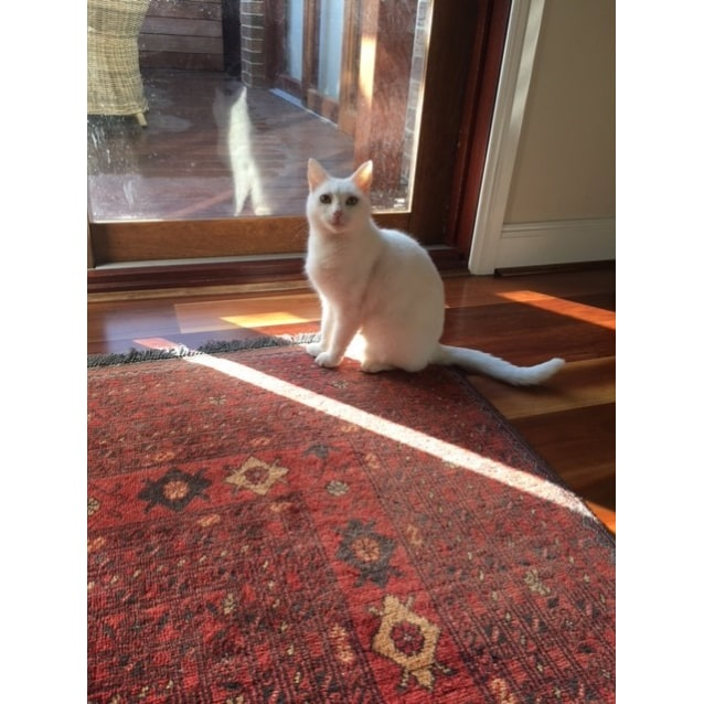 Photo of Jessie (Located In Wantirna South)