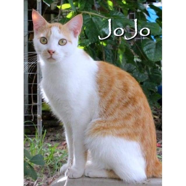 Photo of Jo Jo