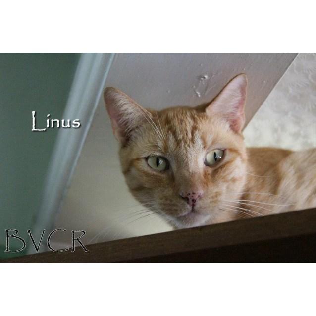 Photo of Linus