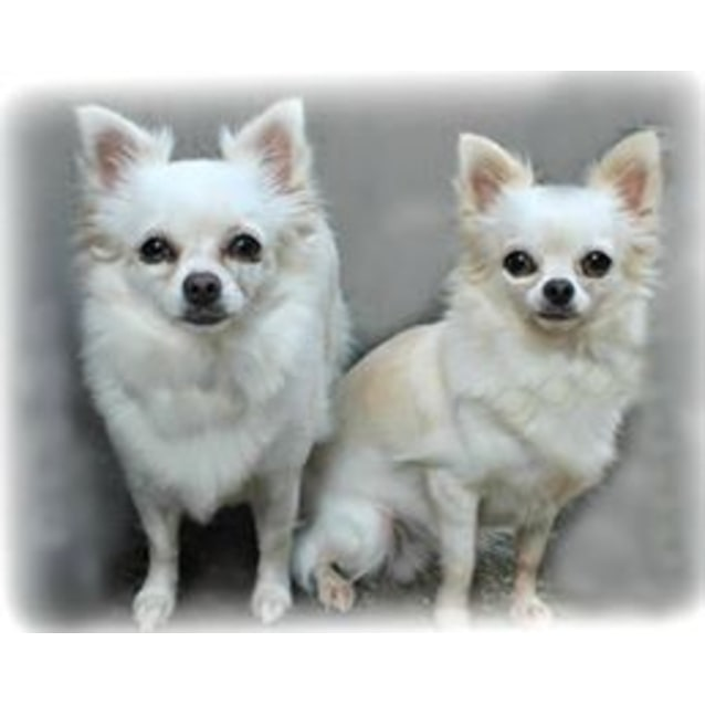Photo of Luka And Lani