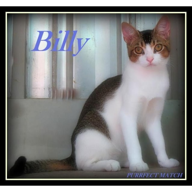 "Photo of ""Billy The Kid""   Purrfect Match"
