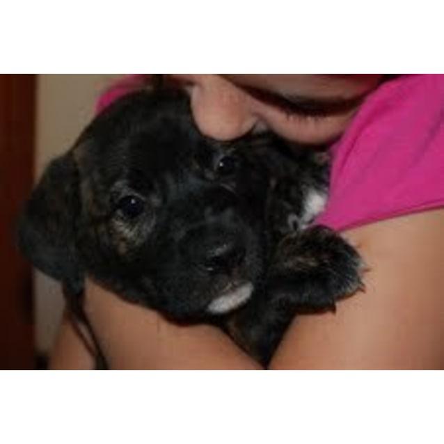 Photo of **Adoption Pending** Kohana