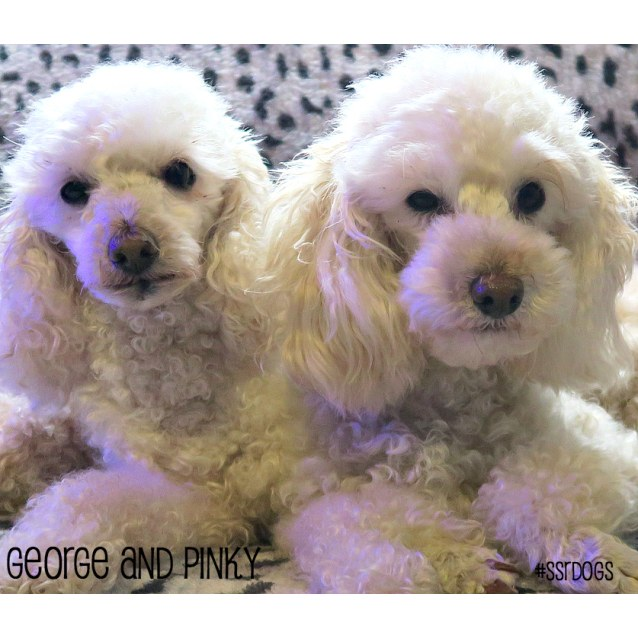 Photo of Pinky (F) & George (M)