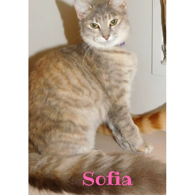 Photo of Sofia