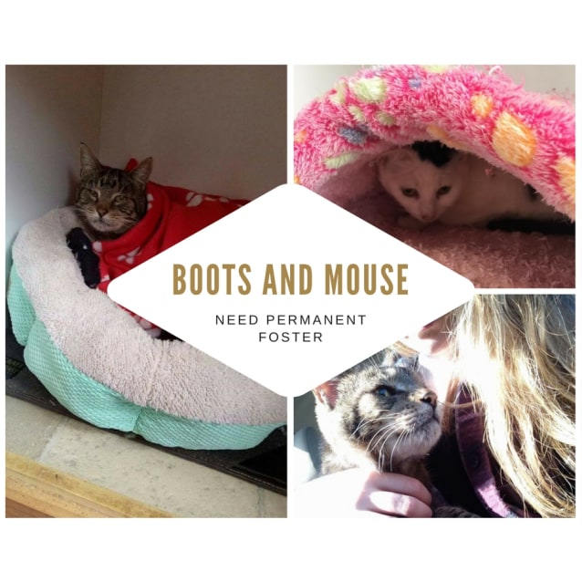 Photo of Boots And Mouse