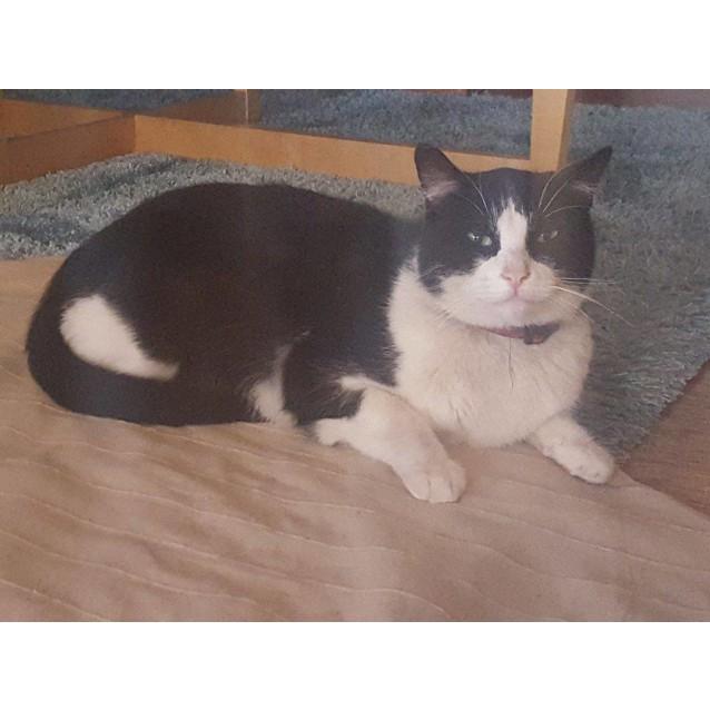 Photo of Felix