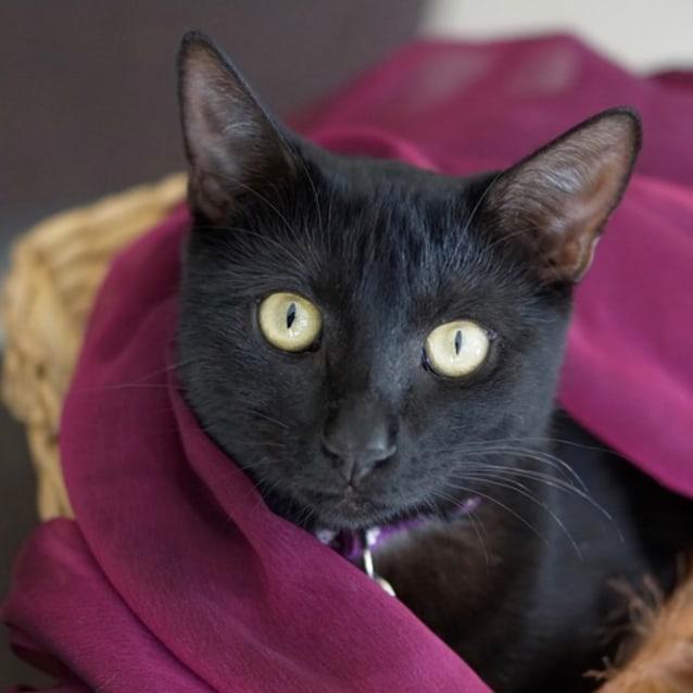 Photo of Babette (C2914)