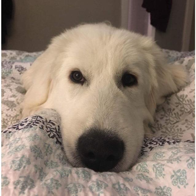 Goulburn Dog Pet Rescue