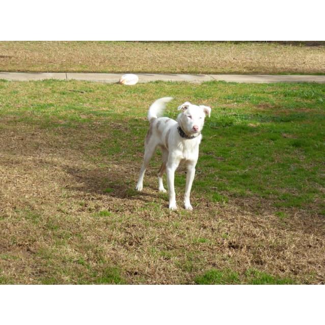 Photo of Rosco