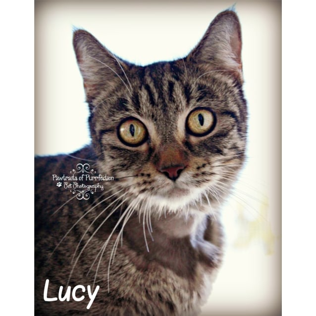 Photo of Lucy