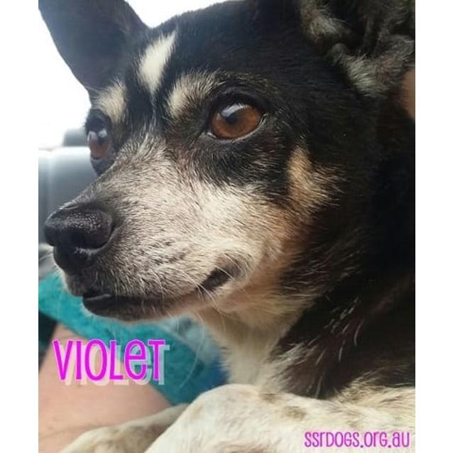 Photo of Violet