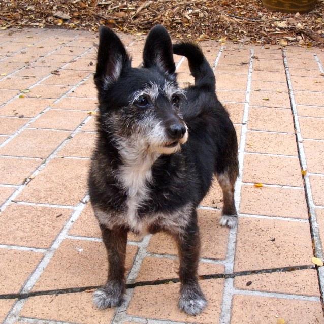 Photo of Lucy Delmar (Adoption In Progress)