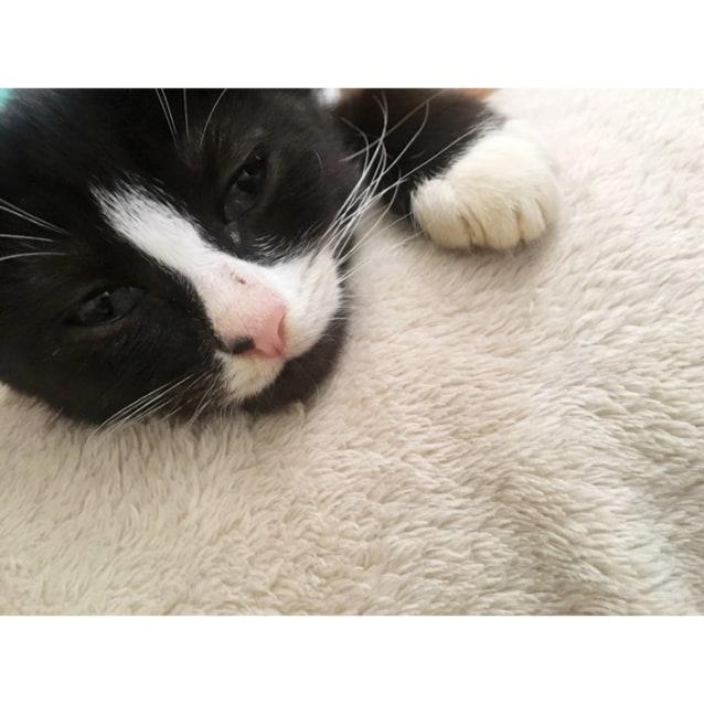 Photo of Snugs