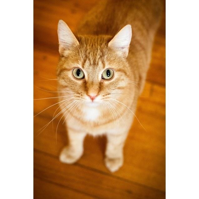 Photo of Ginger (Watsonia)