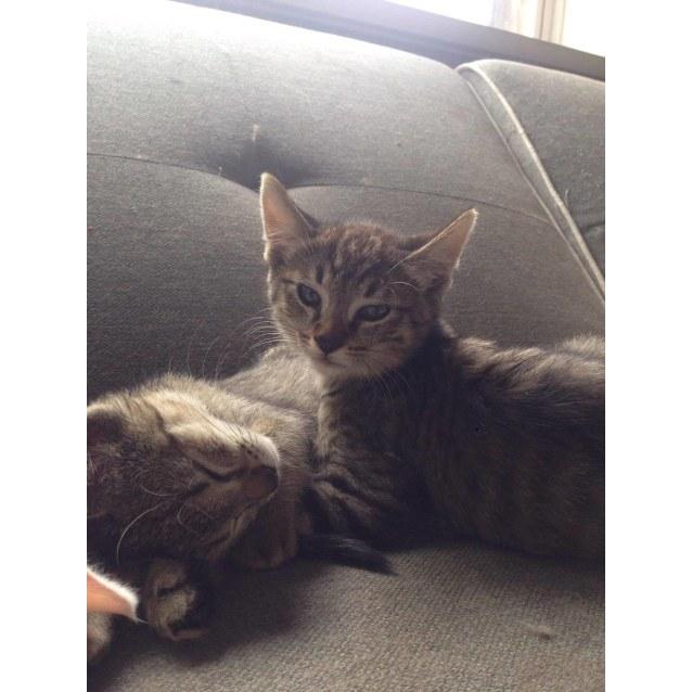 Cat Rescue Thornbury