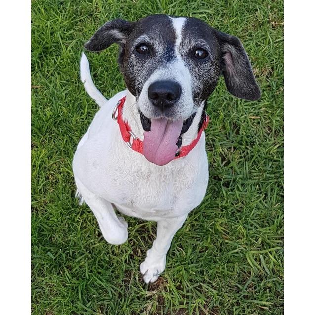 Shenton Park Dog Rescue