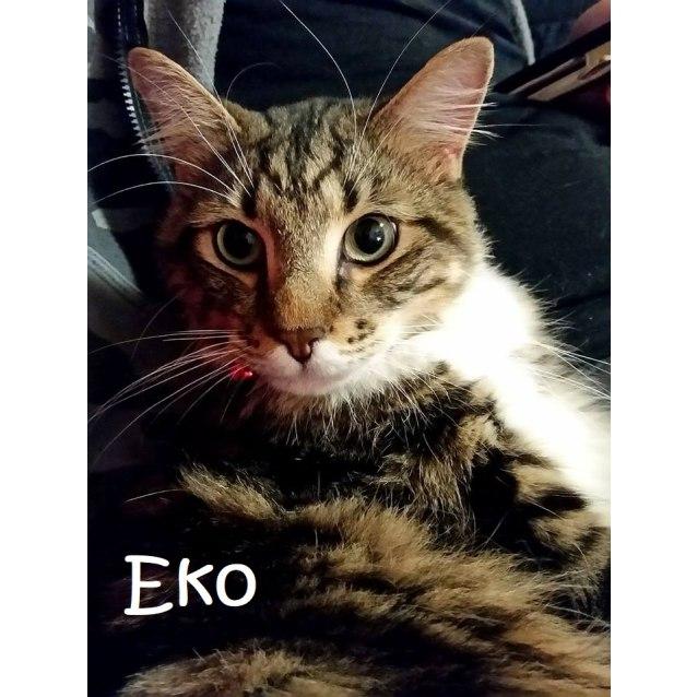 Photo of Eko