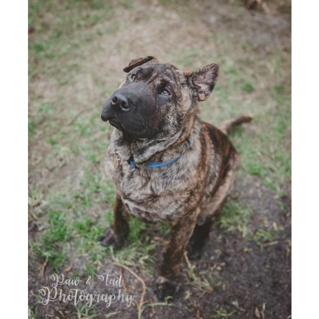 Dog Rescue Albany Wa