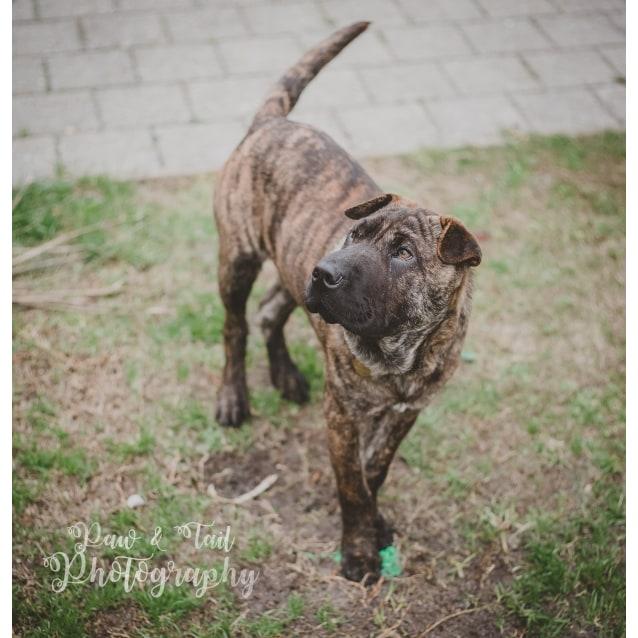 Dog Adoption Albany Wa