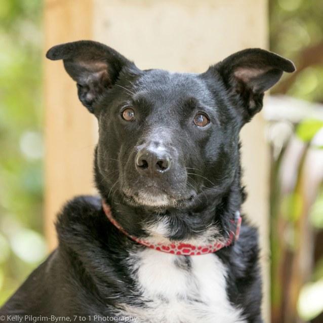 Photo of Tupato   Adopt Me!