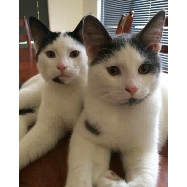 Photo of Nip And Tuck