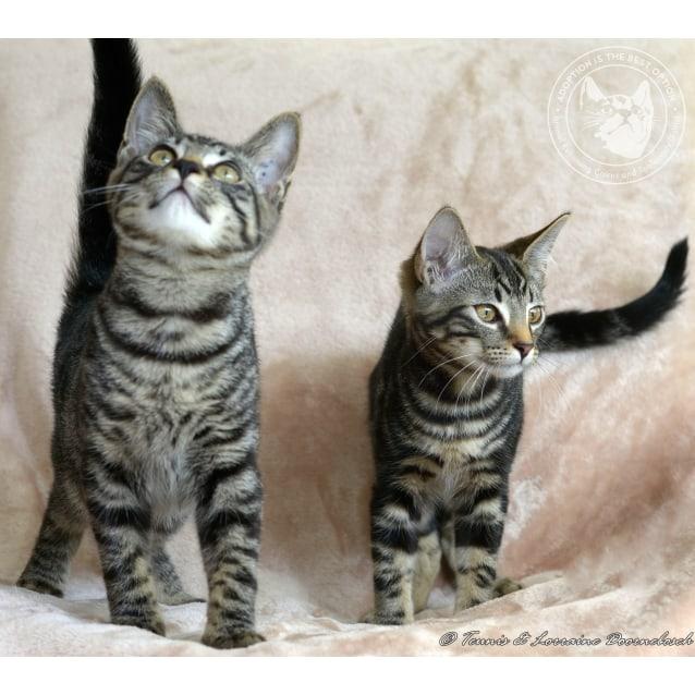 Photo of Quigley & Quentessa